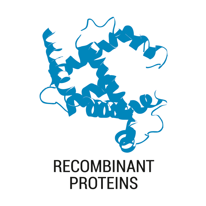 Production of complex biologically active recombinant proteins