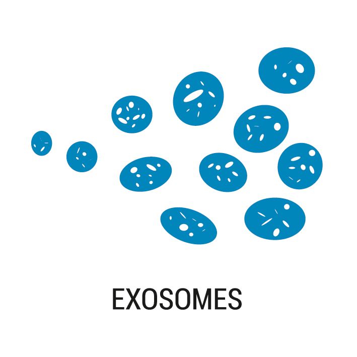 Production of exosomes and EVs