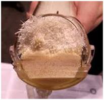 Hollow Fiber Bioreactor cartridge opened to show fibres