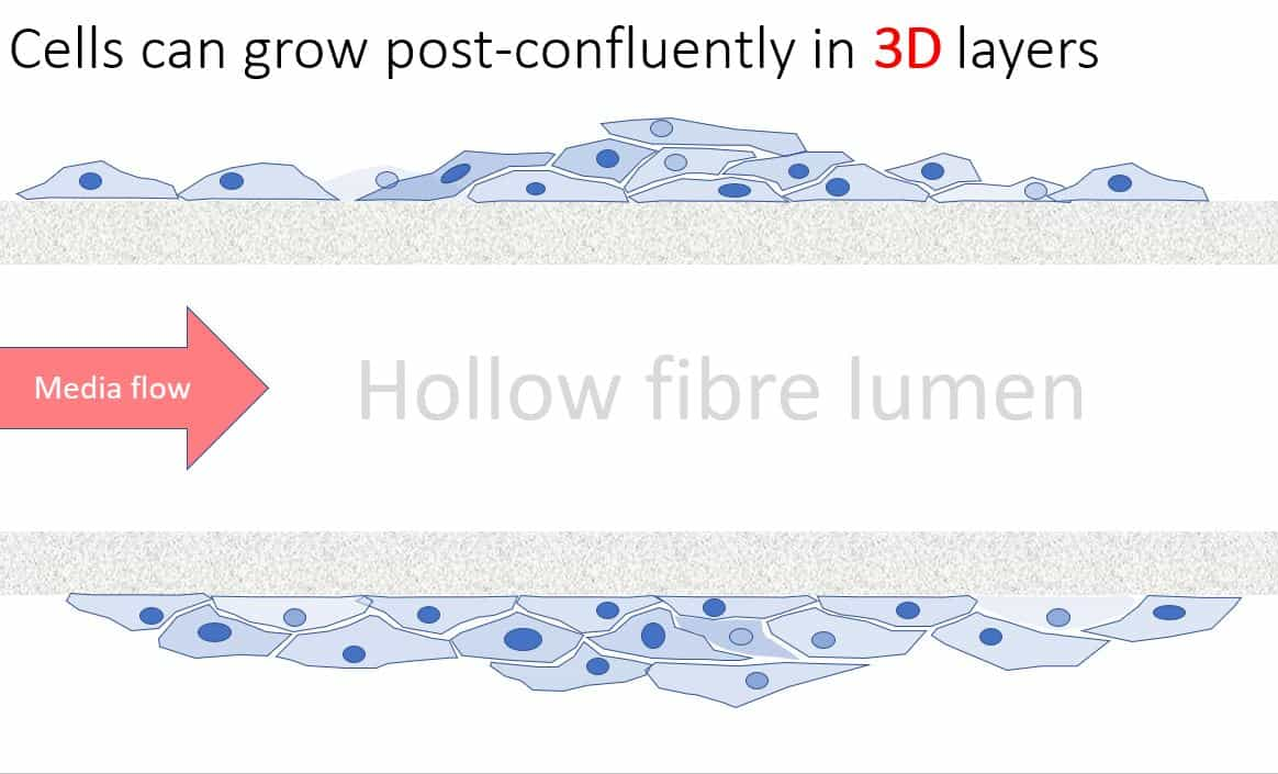 Hollow fibre bioreactor fits in a standard incubator for convenient cell culture scale-up