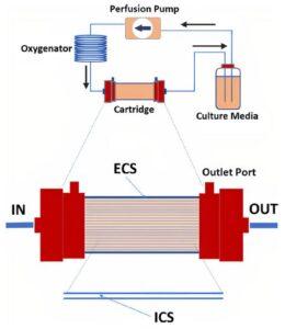 Diagram of hollow fiber bioreactor